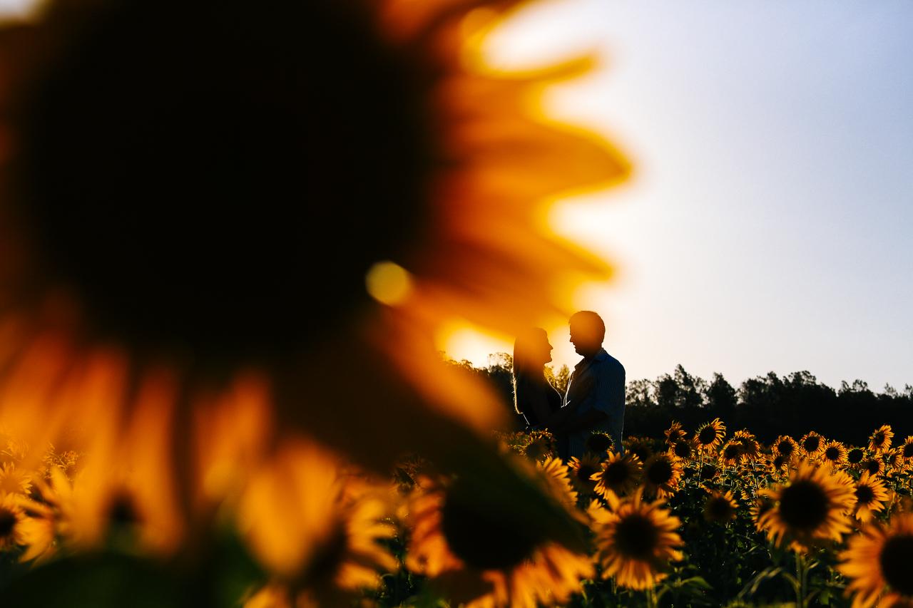 Slide 5 – Sunflowers